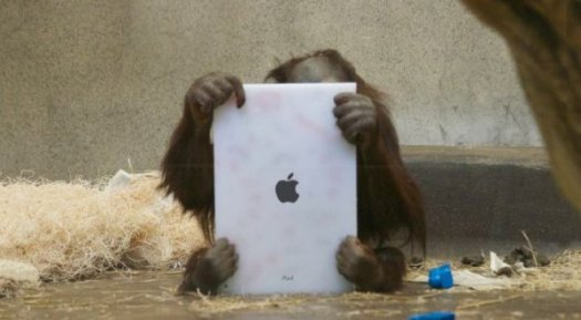 orangutan-with-ipad