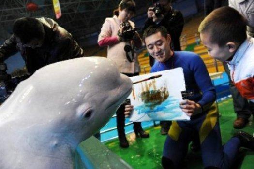 Dolphin-painter