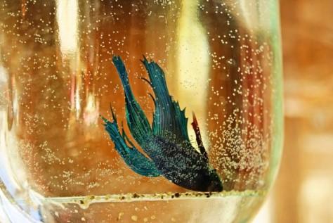drownedfish