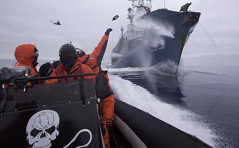 sea-shepherd-cut-japanese-catch