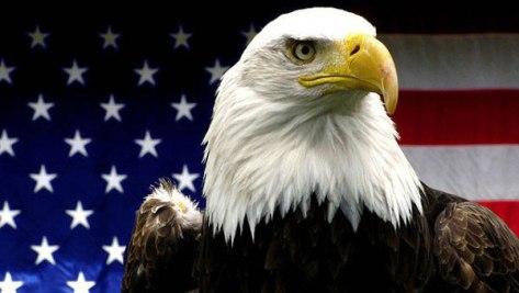 american-bald-eagle