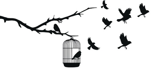 0-birds-out-cage