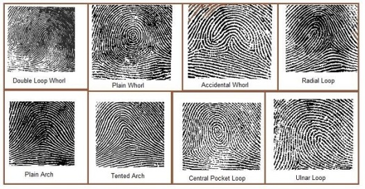 3-fingerprint-types